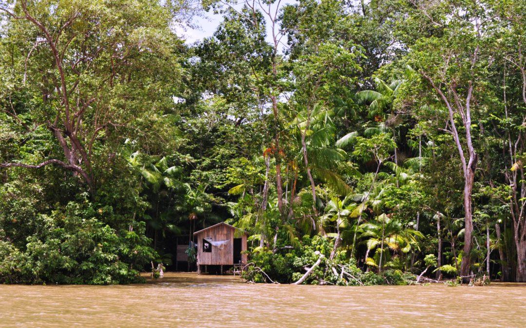 Sínodo 2019: Vaticano denuncia exploração da Amazónia e violação dos direitos dos povos indígenas